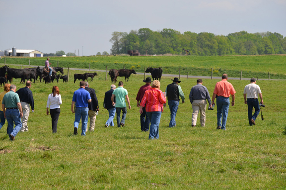 Pasture walk on Angus Farm