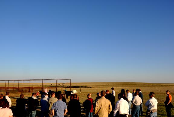 Amarillo ranch day
