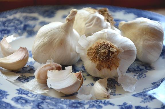 garlic on a blue transferware plate