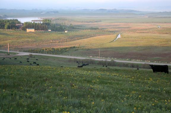 Calgary ranch