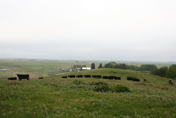Ranch in Calgary, Alberta