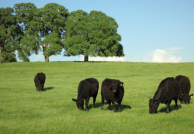Five Star Land & Cattle Company, California