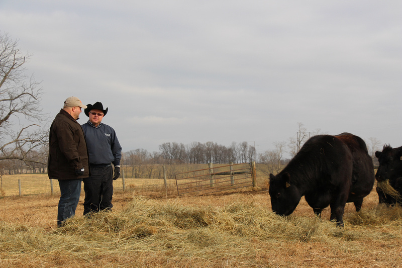 Boyd Beef Cattle in Kentucky